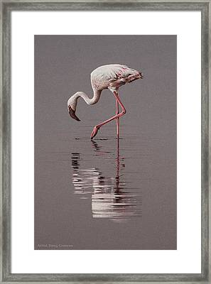 Reflections Framed Print by Doug Comeau