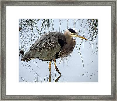 Framed Print featuring the photograph Reflections by I'ina Van Lawick