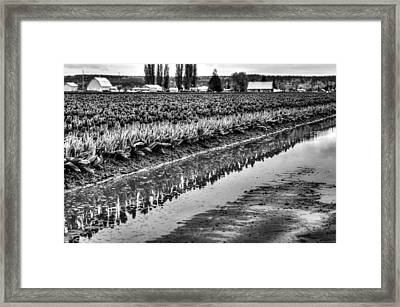 Reflections In Black And White Framed Print by Brian Xavier