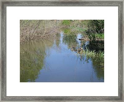 Reflections In The Pond Framed Print by Jewel Hengen