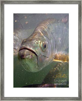 Reflections Framed Print by Jason Mathias