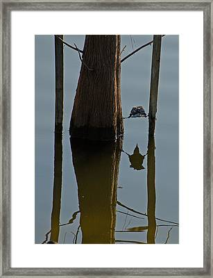 Reflections Framed Print by Julie Cameron