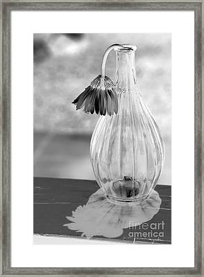 Reflections Lie Framed Print by Amanda Barcon
