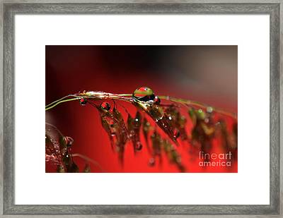 Reflections Framed Print by Michelle Meenawong