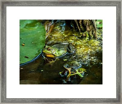 Reflections Of A Bullfrog Framed Print by Optical Playground By MP Ray