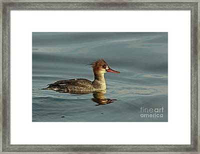 Reflections Of A Clown Face Grebe  Framed Print by Inspired Nature Photography Fine Art Photography