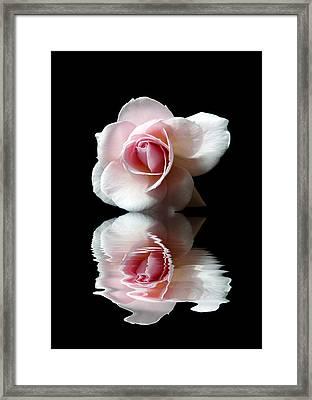 Reflections Of A Rose Framed Print by Lynn Bolt