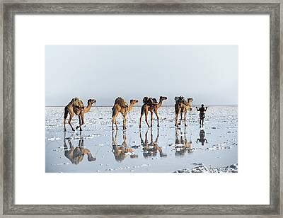 Reflections Of An Ancient Life Framed Print