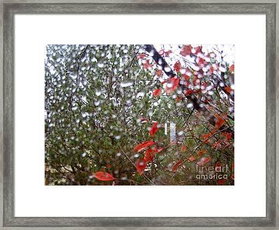 Reflections Of Rain Framed Print