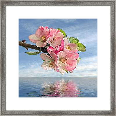 Reflections Of Spring At Apple Blossom Time - Square Framed Print by Gill Billington