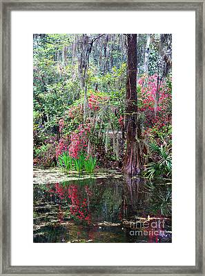 Reflections Of Spring In The South - Digital Painting Framed Print by Carol Groenen