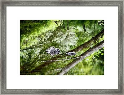 Reflections Of Van Campens Glen Framed Print