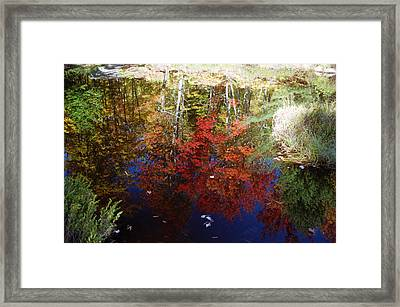 Framed Print featuring the photograph Reflections On Algonquin by David Porteus