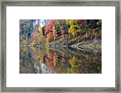 Reflections On The Buffalo Framed Print by Marty Koch