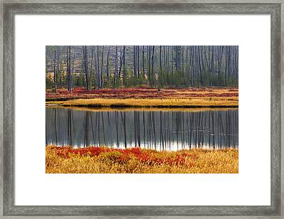 Reflections On The Snake Framed Print