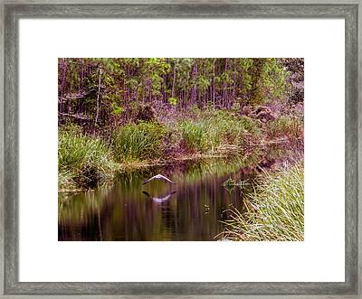 Reflections On The Stream  Framed Print