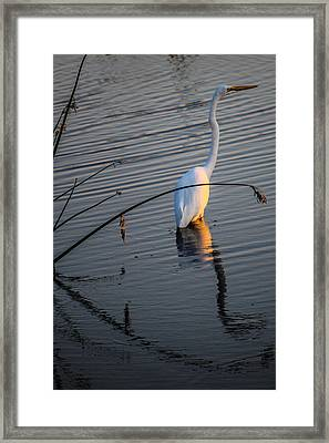 Reflections One Framed Print by Lesley Brindley
