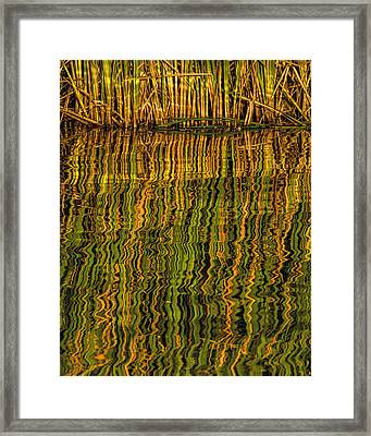 Framed Print featuring the photograph Reflections by Rob Graham