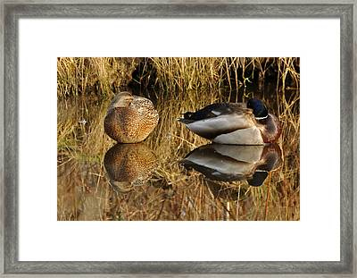 Reflections Framed Print by Sabine Edrissi