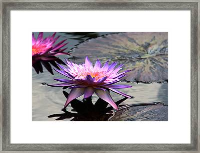 Dark Water Reflections Framed Print by Yvonne Wright
