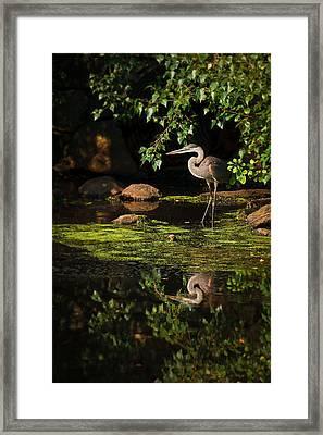 Reflective Heron Framed Print by Sylvia J Zarco