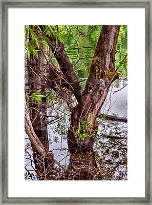 Reflective Trees In A Lake Framed Print by Omaste Witkowski