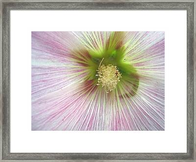Refresh Framed Print by Mike Podhorzer