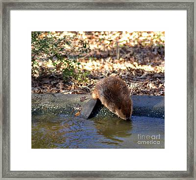 Refreshing Drink Of Water Framed Print by Eva Thomas