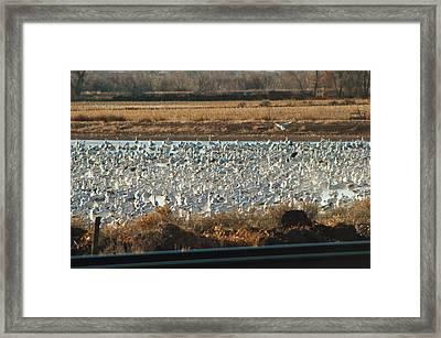 Refuge View 3 Framed Print