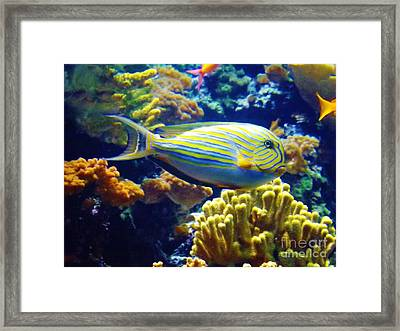 Framed Print featuring the photograph Regal Angel by Brigitte Emme