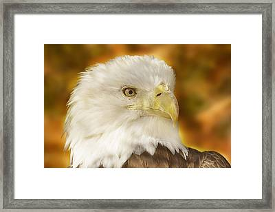 Framed Print featuring the photograph Regal Eagle  by Brian Cross