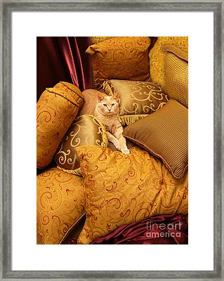 Regal Feline Framed Print by Amy Cicconi