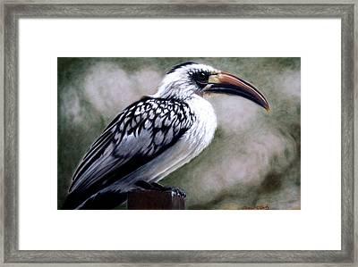 Regal Hornbill Framed Print