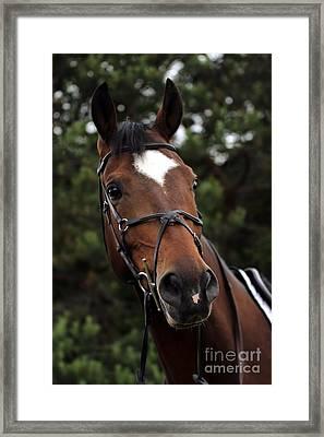 Regal Horse Framed Print