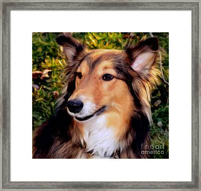 Dog - Collie - Regal Shelter Dog Framed Print by Luther Fine Art