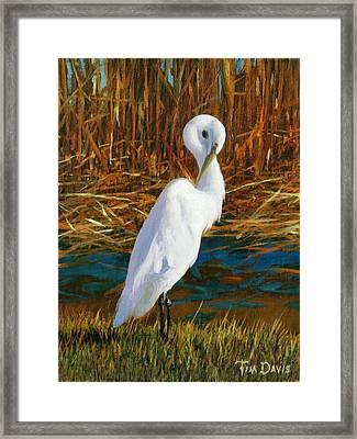 Regal White Framed Print by Tim Davis