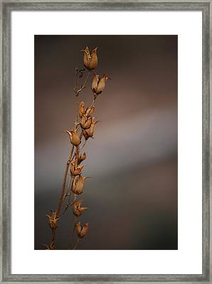 #reggiemiller Framed Print by Becky Furgason