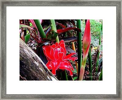 Regular Ginger Flower Framed Print by Tina M Wenger