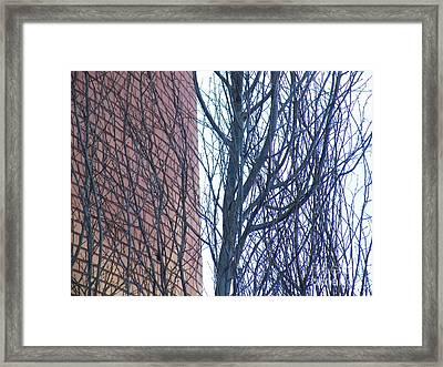 Regular Irregularity  Framed Print by Brian Boyle