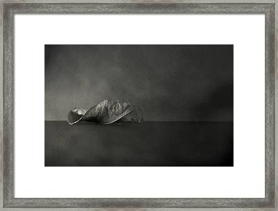 Reincarnate Framed Print by Mark  Ross