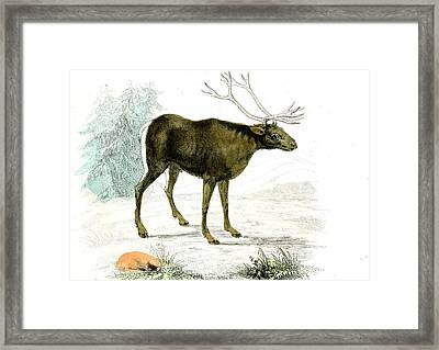 Reindeer Framed Print by Collection Abecasis
