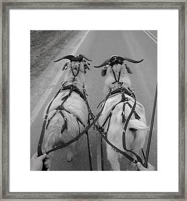 Reins In Hand Framed Print