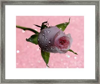 Rekindled Love Framed Print