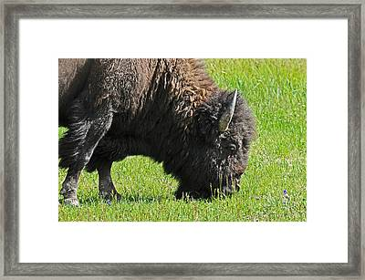 Relax   Framed Print by Jonathan E Whichard