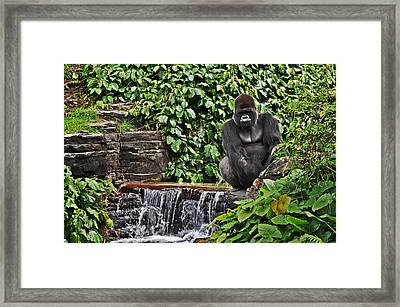 Relaxation Time Framed Print by Rachael Milovich