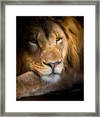 Relaxed Framed Print by Ernie Echols