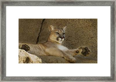 Framed Print featuring the photograph Relaxin' by Brian Cross