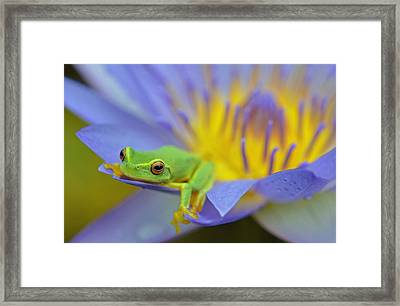 Relaxing By The Pool Framed Print