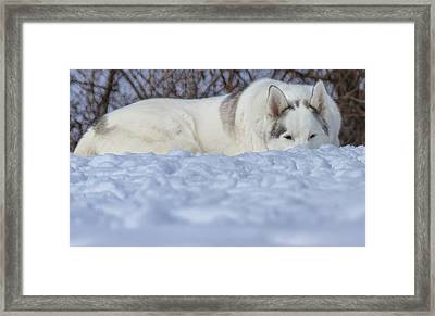 Relaxing In The Snow Framed Print