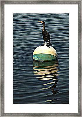 Relaxing On The Bay Framed Print by Bruce Carpenter
